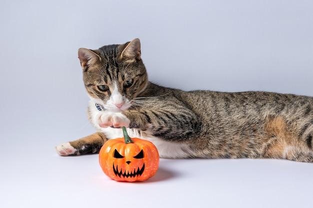 Ładny kot bawi się dynią halloween