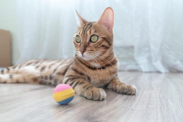 Ładny kot bengalski i piłka. oświetlenie naturalne.