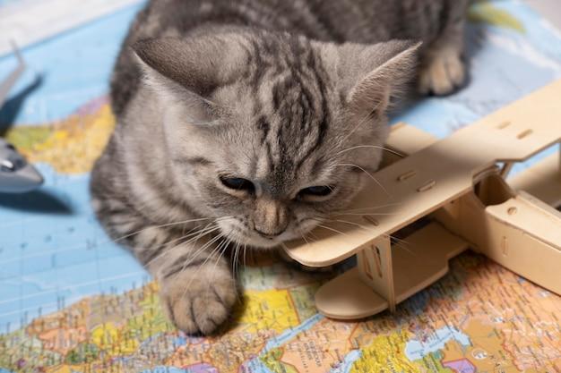 Ładny kot gryzący zabawkę z góry