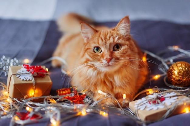 Ładny kot imbir, leżąc w łóżku z świecącymi żarówkami