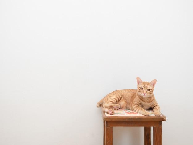 Ładny kot pomarańczowy kolor siedzi na krześle patrząc na kamerę na białym tle