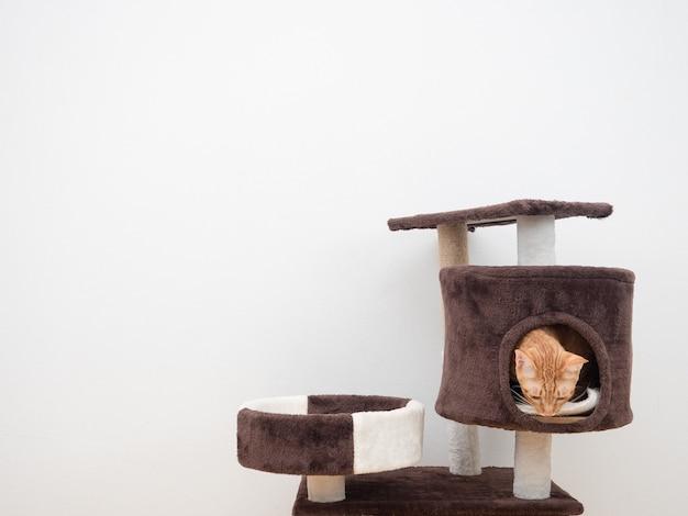 Ładny kot pomarańczowy kolor w mieszkaniu dla kotów na białym tle