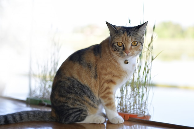 Ładny kot siedzi na balkonie