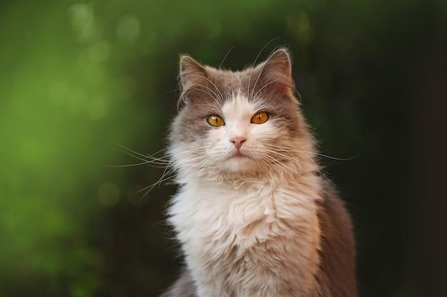 Ładny kot siedzi na naturze. kotek siedzi w kwiatach. młody kot w trawie