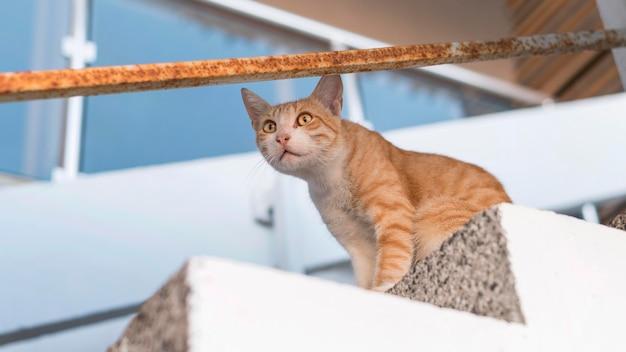 Ładny kot siedzi na schodach na zewnątrz