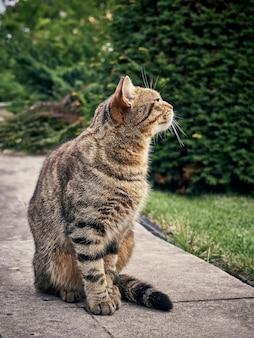 Ładny kot uliczny w parku