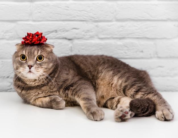 Ładny kot z czerwoną wstążką w głowie