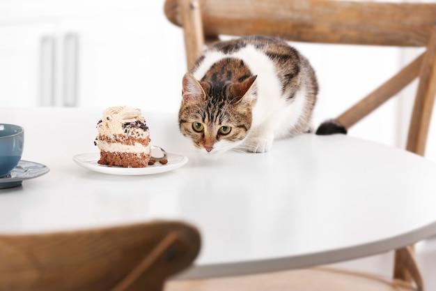 Ładny kot z kawałkiem ciasta na stole w kuchni w domu