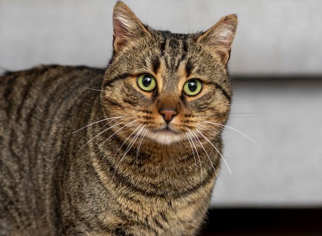 Ładny kot z zielonymi oczami