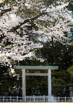 Ładny kwiat brzoskwini w tokio w świetle dziennym