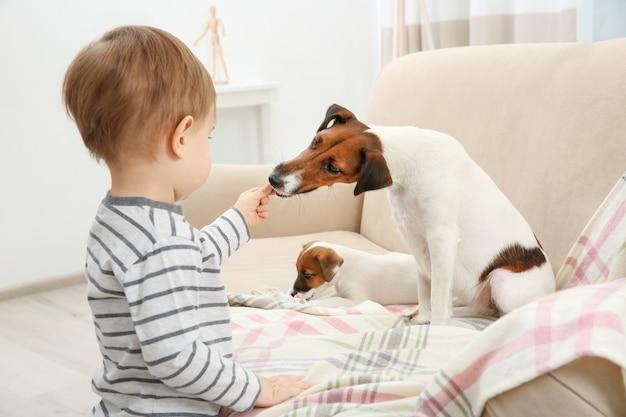 Ładny mały chłopiec i śmieszne psy w domu
