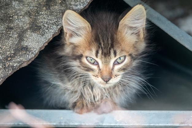 Ładny mały czerwony kotek gra na świeżym powietrzu. portret czerwony kotek w lesie lub ogrodzie wyglądający interesująco. zaprawa murarska śmieszny czerwony kotek z niebieskimi oczami białe łapy gotowy do skoku w gospodarstwie domowym. motyw dla dzieci zwierząt