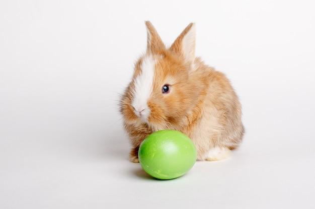 Ładny mały króliczek wielkanocny z jajkiem na białym tle na białej przestrzeni
