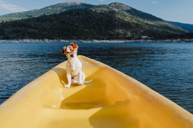 Ładny mały pies jack russell siedzi na żółtym kajaku w jeziorze. czas letni. zwierzęta, przygoda i przyroda