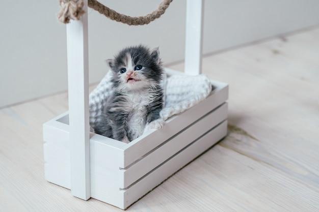 Ładny mały szary i biały kotek siedzi w drewnianym koszu. śliczny zwierzak w domu?