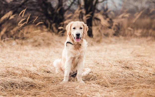 Ładny młody pies na tle przyrody