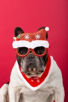 Ładny pies buldog francuski nosi świąteczne okulary i siedzi na czerwono