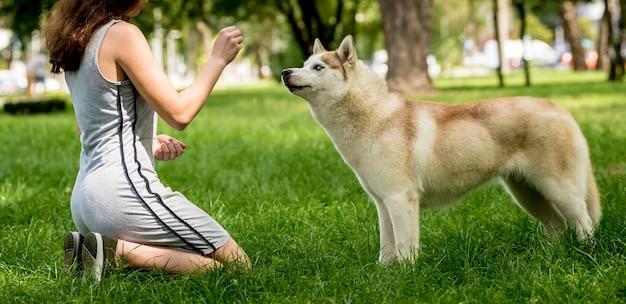 Ładny pies husky w parku