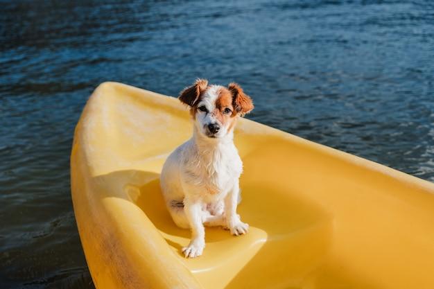 Ładny pies jack russell siedzi na żółtym kajaku w jeziorze w słoneczny dzień. czas letni. zwierzęta, przygoda i przyroda