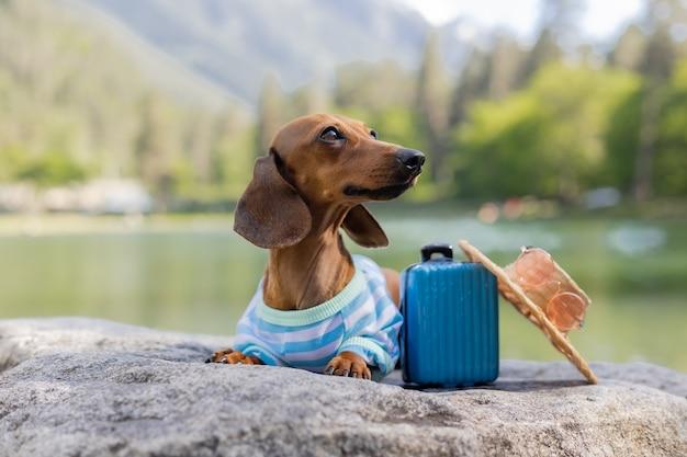 Ładny pies jamnik na wycieczce. jamnik w okularach przeciwsłonecznych, słomkowym kapeluszu i letnich ubraniach siedzi nad wodą z walizką na morzu. wakacje ze zwierzętami. zdjęcie wysokiej jakości