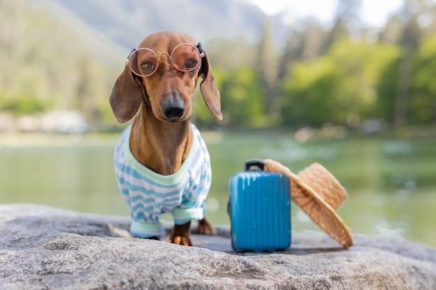 Ładny pies jamnik na wycieczce. jamnik w okularach przeciwsłonecznych, słomkowym kapeluszu i letnich ubraniach siedzi nad wodą z walizką. wakacje ze zwierzętami. zdjęcie wysokiej jakości