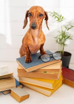 Ładny pies siedzi na książkach