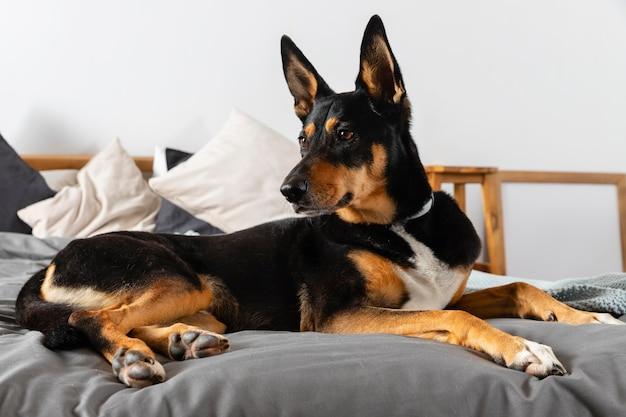 Ładny pies siedzi na łóżku