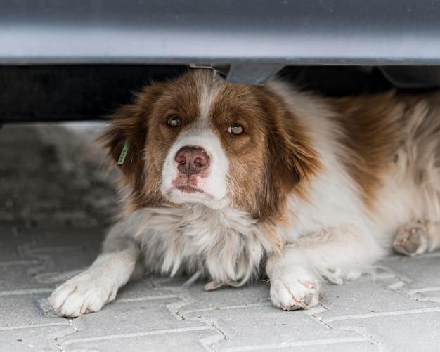 Ładny pies siedzi pod samochodem na zewnątrz