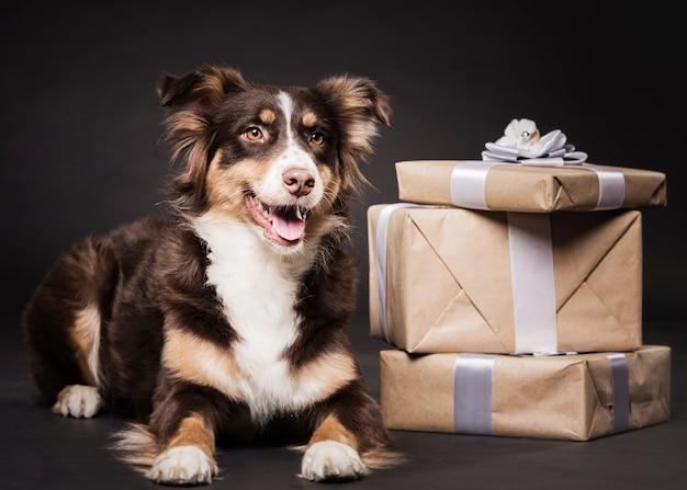 Ładny pies siedzi z prezentami