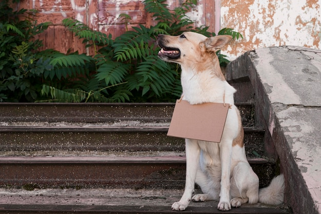 Ładny pies stojący na schodach z banerem