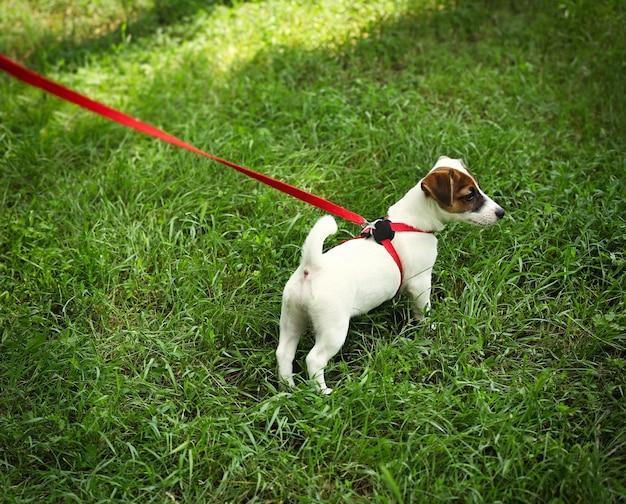 Ładny pies w kołnierzu na zielonej trawie
