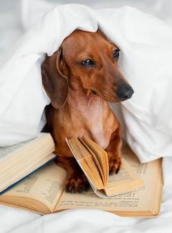 Ładny pies w łóżku z książkami