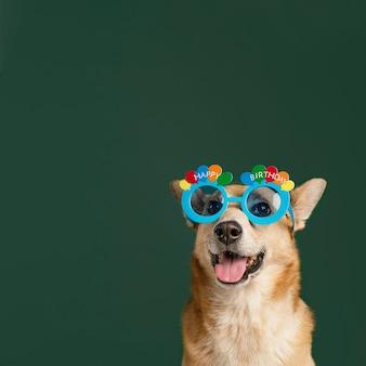 Ładny pies w okularach i zielonym tle
