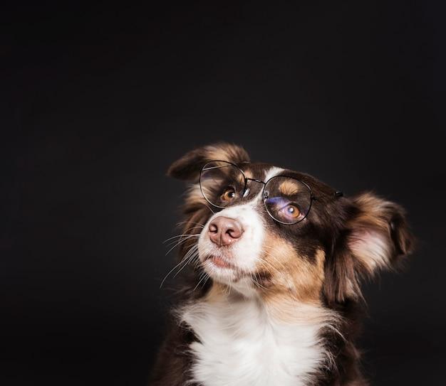 Ładny pies w okularach