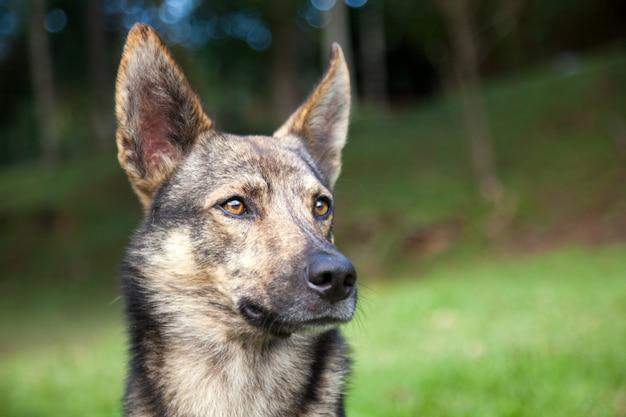 Ładny pies w parku