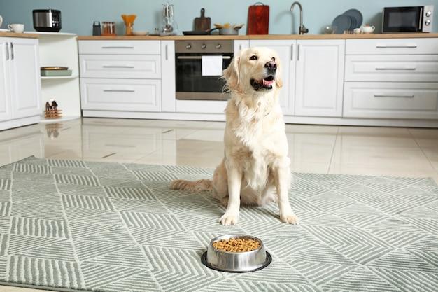 Ładny pies w pobliżu miski z jedzeniem w kuchni
