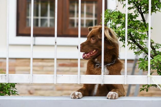 Ładny pies wygląda i czeka na właściciela na płocie