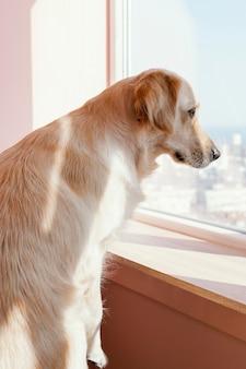 Ładny pies wygląda przez okno