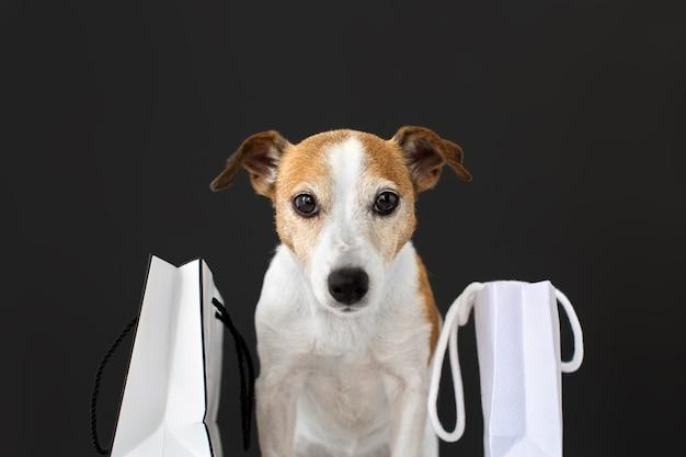 Ładny pies z białymi papierowymi torbami z zakupami siedzi i patrzy w kamerę na czarno.