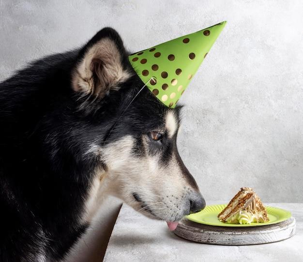 Ładny pies z kawałkiem ciasta