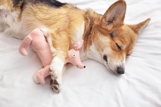 Ładny pies z zabawką, leżąc na łóżku