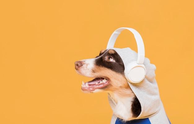Ładny pies ze słuchawkami