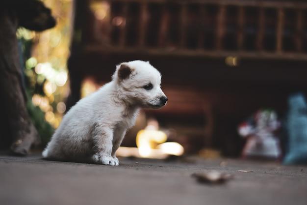Ładny samotny mały pies siedzi na podłodze. vintage ton