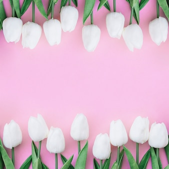 Ładny symetryczny skład z białymi tulipanami na pastelowym różowym tle