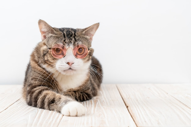 Ładny szary kot w okularach