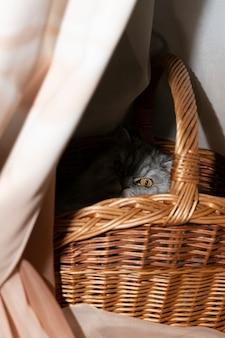 Ładny szary kot wygląda z kosza. koncepcja - obserwuję cię