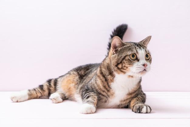Ładny szary kot