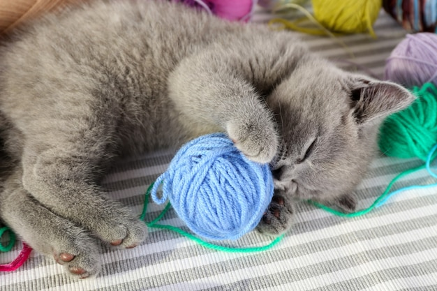 Ładny szary kotek z kolorowymi kulkami nici na pasiastym dywanie, zbliżenie