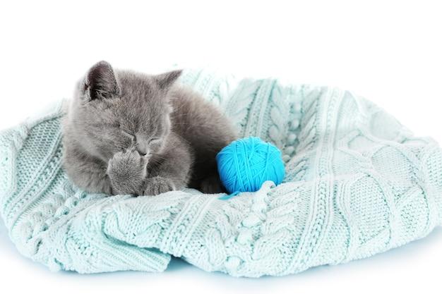 Ładny szary kotek z motkiem nici na białym tle