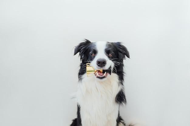 Ładny szczeniak pies rasy border collie, trzymając kubek trofeum mistrz miniaturowy w ustach na białym tle